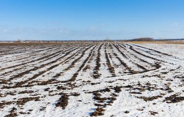 Ukrainian agricultural landscape at winter season