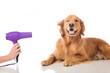 Leinwanddruck Bild - Grooming Dog