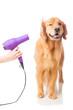 Leinwanddruck Bild - dog groomer