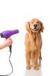 Grooming Dog - 76335563