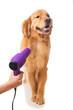 Grooming Dog - 76335593