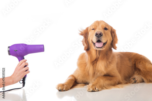Leinwandbild Motiv Grooming Dog