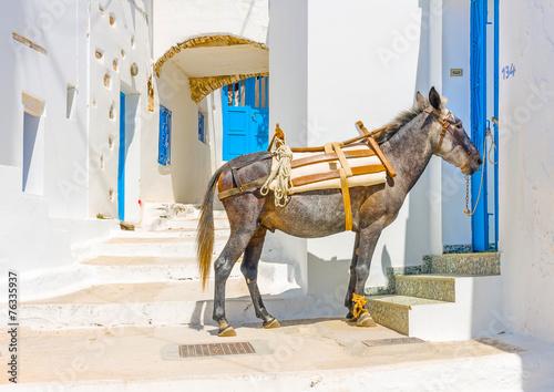 Poster Ezel mule sitting in the street in Langada in Amorgos island Greece