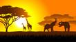 ������, ������: African savanna an evening landscape