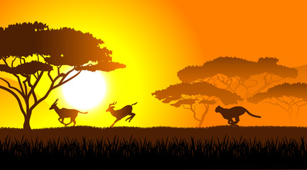 African savanna an evening landscape