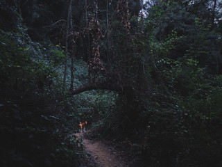 Dog waits you on the narrow path in forest