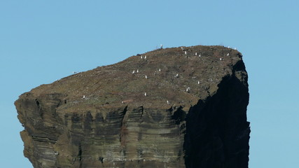 Many Seagull Sitting on Top High Rock, Azores