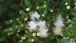 Obrazy na płótnie, fototapety, zdjęcia, fotoobrazy drukowane : Honey Bee on a white flower