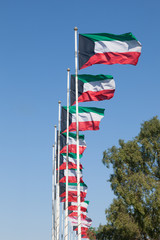 Row of Kuwait national flags. Middle East, Arabia