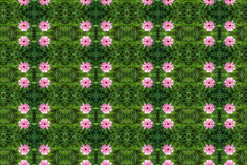 pink pattern gerbera flower on green background