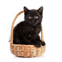 Black kitten in a wattled basket.