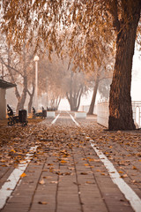 Autumn in the Krasnodar city, Russia