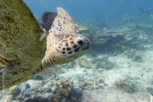 Papiers peints Tortue Sea Turtle portrait close up while looking at you