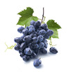 Small wet blue grapes bunch and leaves isolated on white
