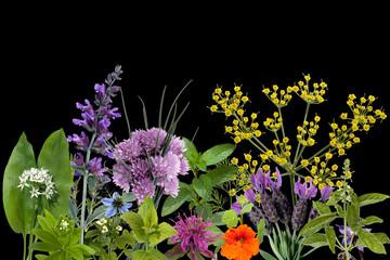 Heilpflanzenarrangement, Kraeuterbilder,