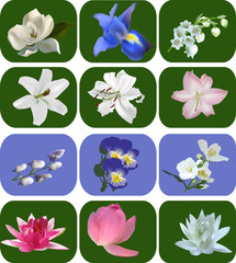 twelve different flowers collection