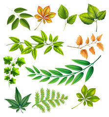 Different leaves