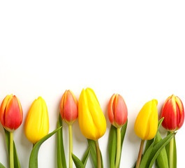 Tulpenmotiv