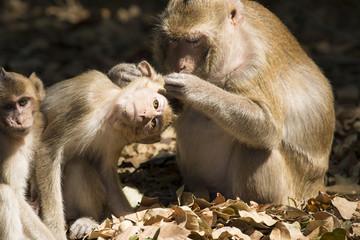 Check the baby monkey ticks.