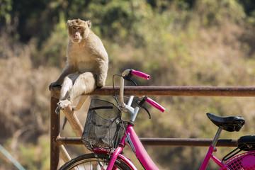 Monkey sitting on a railing