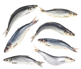 Collage of fresh fish, isolated on white