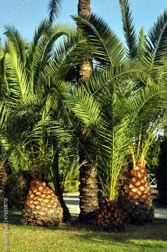 Eine kleine Palmengruppe