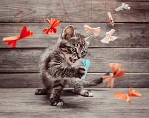Kitten playing with paper bows