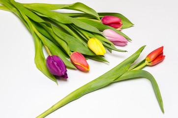 tulip bouquet against a single flower