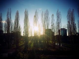 Sole fra gli alberi