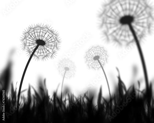 Dandelion backgroound - 76360160