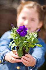 Gardening: Little Girl Holding Out Pansy Seedling