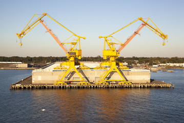 Two Yellow Cranes