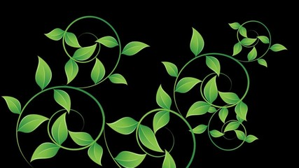 Curls of green foliage