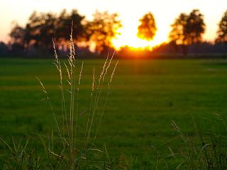Entspannung beim Sonnenuntergang Halme