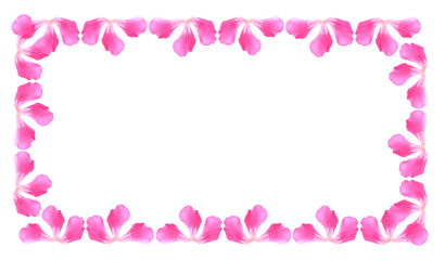 floral background of pink flowers