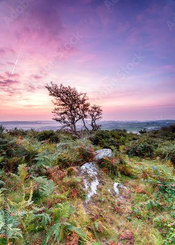 Fotobehang Purper Rugged Cornish Countryside