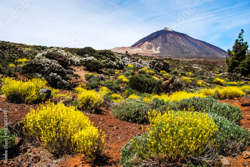 Leinwanddruck Bild Teide Vulkan auf Teneriffa mit Blumen