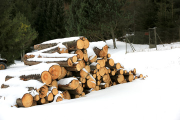 wooden logs under snow