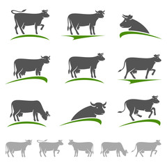 Cow set. Vector