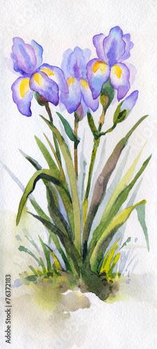 Foto op Aluminium Iris Watercolor landscape. Lush purple irises in the park