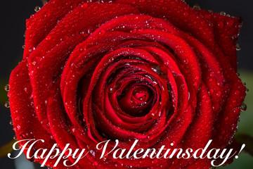 Happy Valentinsday!