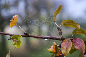 closeup of spider net at a tree