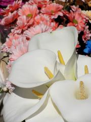 Kala flowers