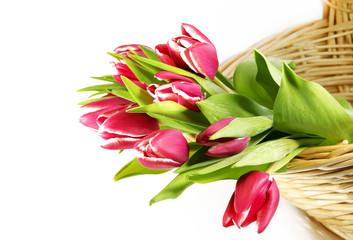 Tulpen im Korb auf weiss