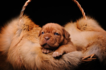 the puppy fur in the basket