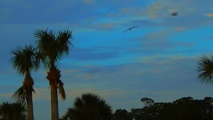 birds flying around palm trees on shore