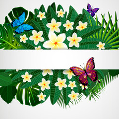 Floral design background. Plumeria flowers, tropical leaves.