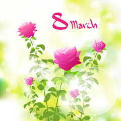 8 march gift card with pink rose over green spring blur