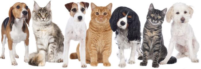 Hunde und Katzen Gruppe isoliert