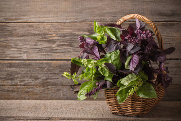 purple and green basil on a wooden background